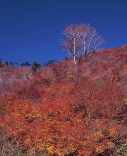 晩秋の一ノ倉沢の写真素材 [FYI00337150]