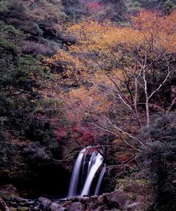 晩秋の初景滝の写真素材 [FYI00337151]