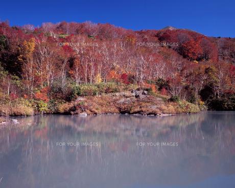 地獄沼の秋の素材 [FYI00337200]