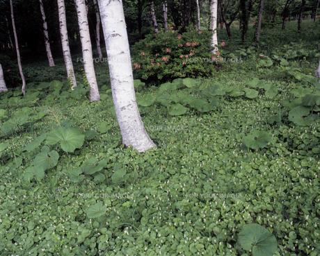 新緑の県民の森の素材 [FYI00337204]