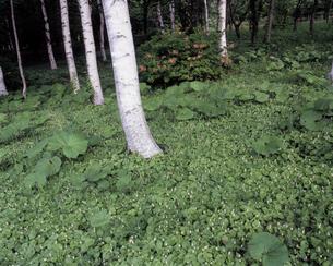 新緑の県民の森の写真素材 [FYI00337204]