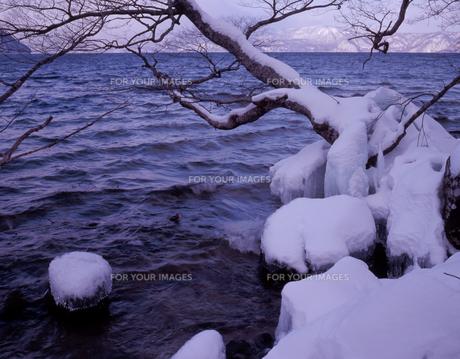 十和田湖岸の氷雪の素材 [FYI00337213]