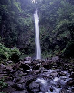 雨の阿弥陀ヶ滝の写真素材 [FYI00337216]