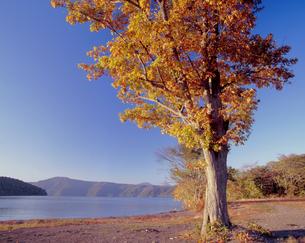 秋彩の十和田湖畔の写真素材 [FYI00337246]