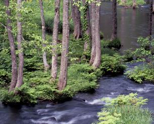 新緑の長瀬川の写真素材 [FYI00337248]