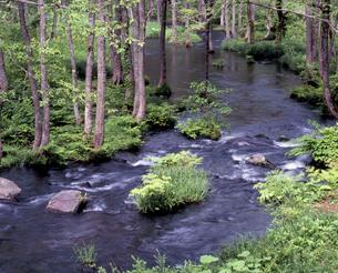 清流長瀬川の写真素材 [FYI00337249]