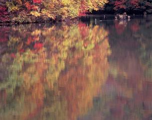 秋彩の曲沢沼の写真素材 [FYI00337255]