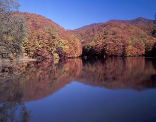 秋晴れの曲沢沼の写真素材 [FYI00337262]