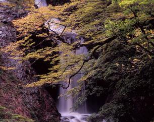 色づく十二滝の素材 [FYI00337337]