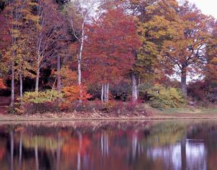 巣鷹湖の紅葉の写真素材 [FYI00337412]