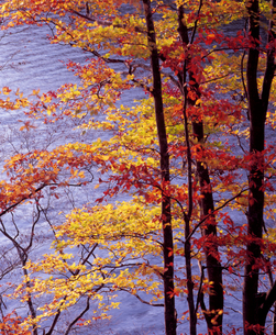秋元湖の紅葉の写真素材 [FYI00337468]