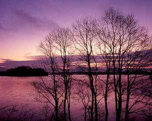 初冬の朝の写真素材 [FYI00337534]