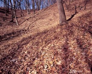 落ち葉のベールの写真素材 [FYI00337599]