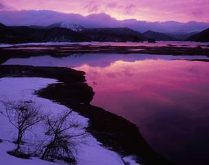 早春の夜明けの写真素材 [FYI00337601]