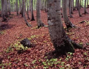 芽吹きの森の写真素材 [FYI00337625]