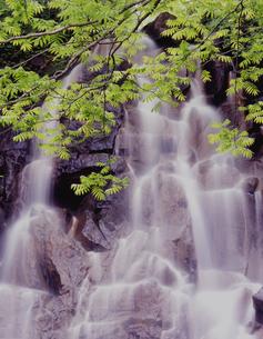 若葉の滝の写真素材 [FYI00337662]