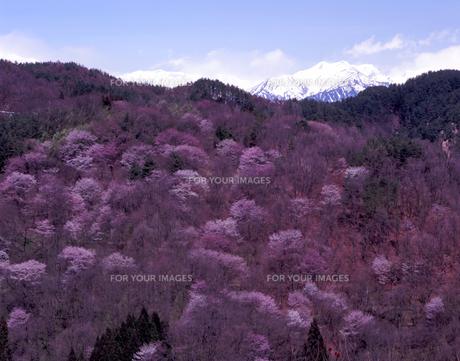陽春の山里の素材 [FYI00337677]