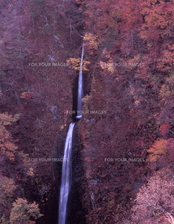 二段滝の秋の素材 [FYI00337735]
