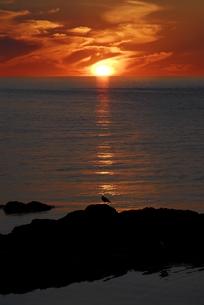礼文島の夜明けの素材 [FYI00337743]