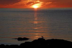 礼文島の朝の写真素材 [FYI00337745]