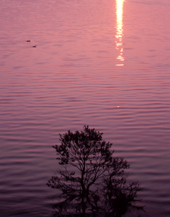 秋元湖の夜明けの写真素材 [FYI00337866]