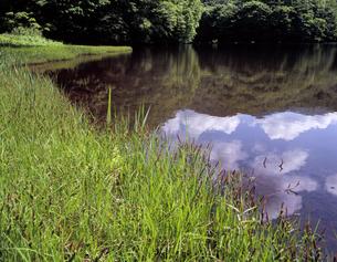 初夏の水辺の写真素材 [FYI00337969]