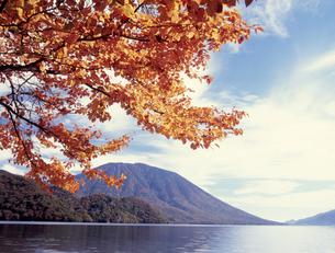 千手ヶ浜の紅葉の写真素材 [FYI00337999]