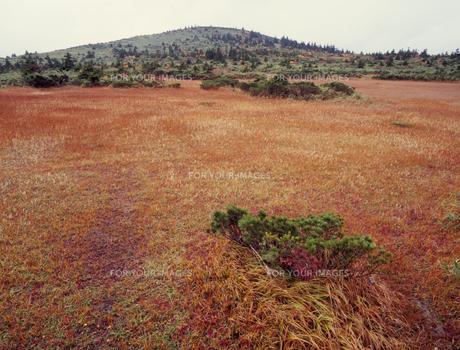 田茂萢湿原の秋の素材 [FYI00338017]