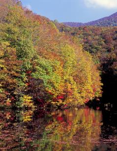 曲沢沼の秋の写真素材 [FYI00338022]