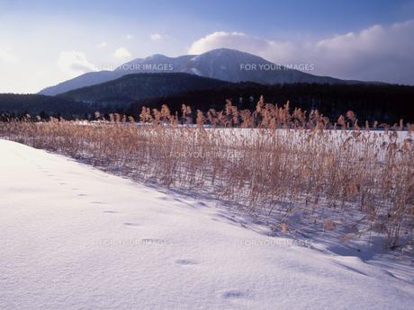 霊仙寺湖冬景色の素材 [FYI00338038]