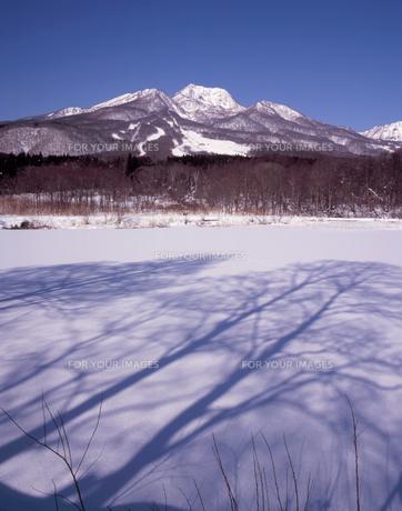 冬晴れのイモリ池の写真素材 [FYI00338052]
