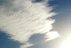 彩雲の写真素材 [FYI00338090]