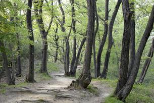新緑の雑木林の写真素材 [FYI00338224]
