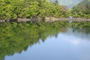 新緑の奥多摩湖の写真素材 [FYI00338268]