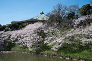 牛ヶ淵の桜の写真素材 [FYI00338356]