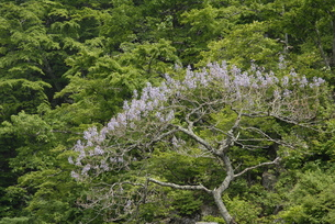 花木の素材 [FYI00338361]