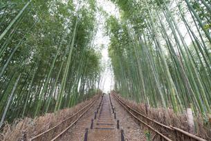竹林の小路の写真素材 [FYI00338397]