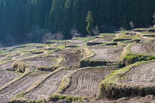 福島の棚田の春の写真素材 [FYI00338591]
