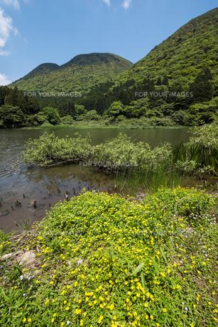 キジムシロ咲くお玉が池の素材 [FYI00338627]