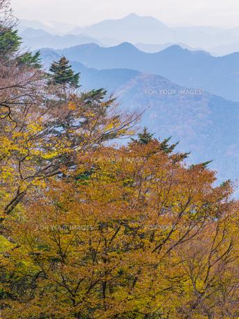 高尾山の紅葉の写真素材 [FYI00338673]