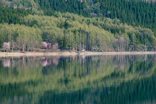 新緑の青木湖の素材 [FYI00338771]