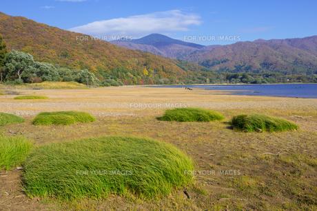桧原湖畔の緑草の素材 [FYI00338793]