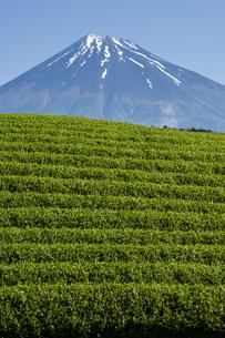 お茶畑と富士山の写真素材 [FYI00338873]