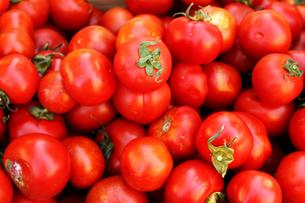 マルシェのトマトの写真素材 [FYI00361034]