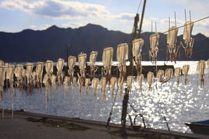 イカを干している漁港の写真素材 [FYI00361036]