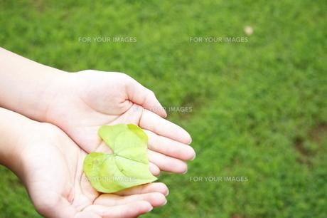 緑を大切にの素材 [FYI00361068]