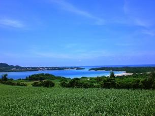 石垣島の夏の素材 [FYI00361235]