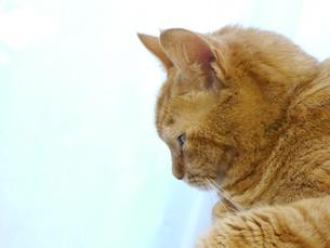 眠そうな猫の写真素材 [FYI00361237]