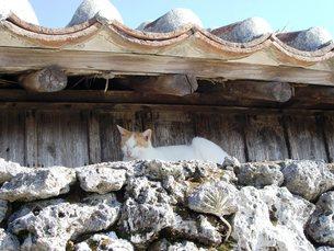 竹富島の眠り猫の写真素材 [FYI00361244]