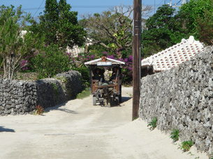 竹富島の水牛車の写真素材 [FYI00361252]